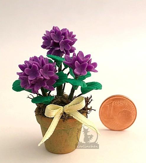 hydrengeain in cotta pot, purple