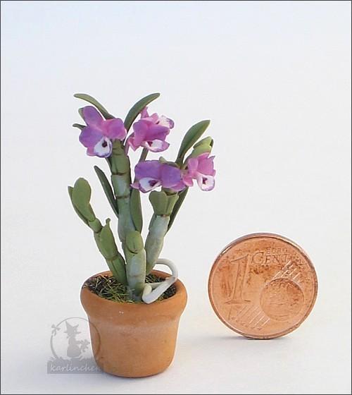 Orchidee, lila im Topf
