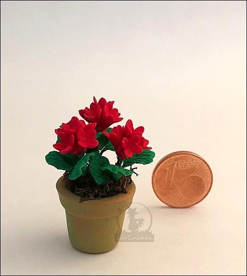 red geranium in cotta pot